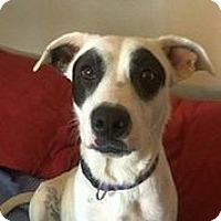 Adopt A Pet :: Roulette - Austin, TX