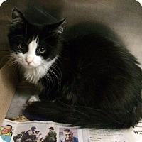 Adopt A Pet :: Isabel - New York, NY