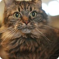 Adopt A Pet :: Shirley - Canoga Park, CA
