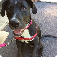 Adopt A Pet :: Zoey D3633 - Shakopee, MN