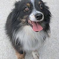 Adopt A Pet :: Elliot - Kansas city, MO
