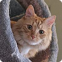 Adopt A Pet :: Mojo - Columbia, MD