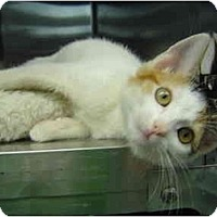 Adopt A Pet :: Jelly Belly - Modesto, CA