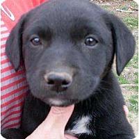 Adopt A Pet :: Tillie - Harrison, AR