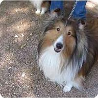 Adopt A Pet :: FRANK - apache junction, AZ