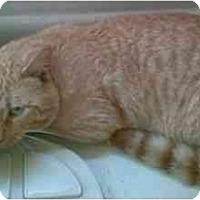 Adopt A Pet :: Ginseng - Fort Lauderdale, FL