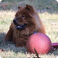 Adopt A Pet :: Princess - Tucker, GA