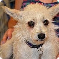 Adopt A Pet :: Lola - Simi Valley, CA