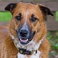 Adopt A Pet :: Miley - Bulverde, TX