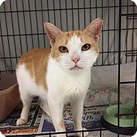 Adopt A Pet :: Ginger - Glen Mills, PA