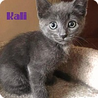 Adopt A Pet :: Kali - Sweetie-Pie! - Huntsville, ON