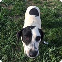 Lakeland Terrier/Beagle Mix Dog for adoption in Traverse City, Michigan - Sadie
