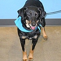 Adopt A Pet :: Nadia - Wildomar, CA