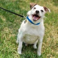 Adopt A Pet :: Rambo - Sherwood Park, AB