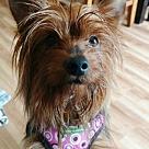 Adopt A Pet :: RooRoo