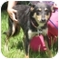 Photo 2 - Shepherd (Unknown Type)/Collie Mix Dog for adoption in Kingwood, Texas - Misty