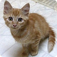 Adopt A Pet :: Carmel - Bedford, MA
