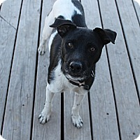 Adopt A Pet :: Duke - Fountain, CO