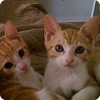 Adopt A Pet :: Jinx and Juju - Miami, FL