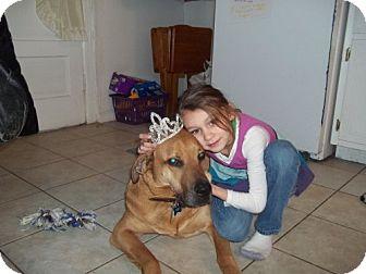 Labrador Retriever/Shepherd (Unknown Type) Mix Dog for adoption in Rockville, Maryland - Timba
