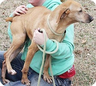 Hound (Unknown Type) Mix Dog for adoption in Tahlequah, Oklahoma - Rosie