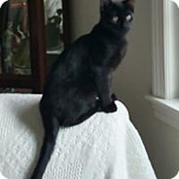 Adopt A Pet :: Charlie - N. Billerica, MA