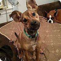 Adopt A Pet :: Flora - East Rockaway, NY