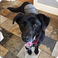 Adopt A Pet :: Bailey - Bellingham, WA
