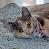 Adopt A Pet :: Tinker Bell - Lago Vista, TX