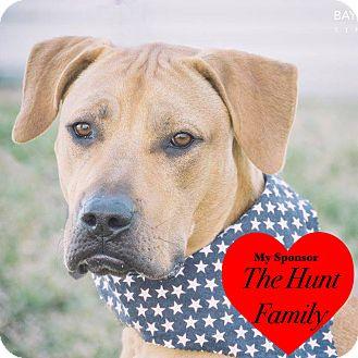 Labrador Retriever Mix Dog for adoption in San Leon, Texas - Cash