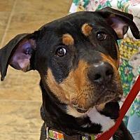 Adopt A Pet :: Grover - Sprakers, NY