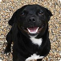 Adopt A Pet :: Moose - Lacon, IL