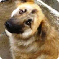 Adopt A Pet :: Bliss - Oswego, IL