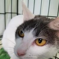 Adopt A Pet :: Jinkies - Waterville, ME