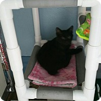 Adopt A Pet :: Vader  Mystery - Minneapolis, MN