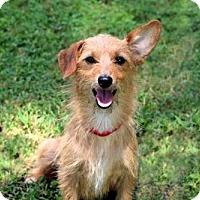 Adopt A Pet :: TOPAZ - Washington, DC