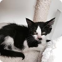 Adopt A Pet :: Zappa - Los Angeles, CA
