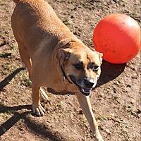 Adopt A Pet :: Zeke - North Branch, NJ