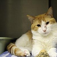 Adopt A Pet :: jude paw - Muskegon, MI