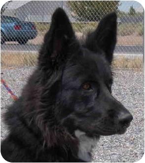 German Shepherd Dog Mix Dog for adoption in Las Vegas, Nevada - Bella