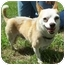 Photo 2 - Chihuahua Dog for adoption in North Judson, Indiana - Nemo