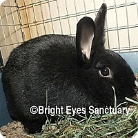 Adopt A Pet :: Starshine - Rockville, MD