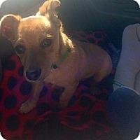 Adopt A Pet :: Radar - Oceanside, CA