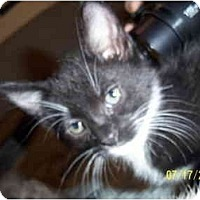 Adopt A Pet :: Shirley - Cleveland, OH