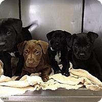 Adopt A Pet :: Rocky - Cumming, GA