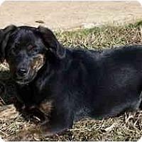 Adopt A Pet :: Nutmeg - York, SC