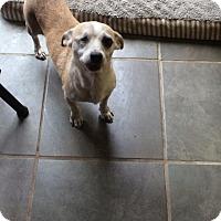 Adopt A Pet :: Dora Beans - Freeport, NY