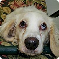 Adopt A Pet :: Parker - Sugarland, TX