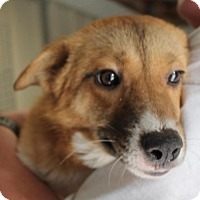 Adopt A Pet :: Leona*ADOPTED!* - Chicago, IL