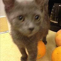 Adopt A Pet :: Lila - Sunny Isles Beach, FL